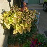 お店の花壇も冬バージョン
